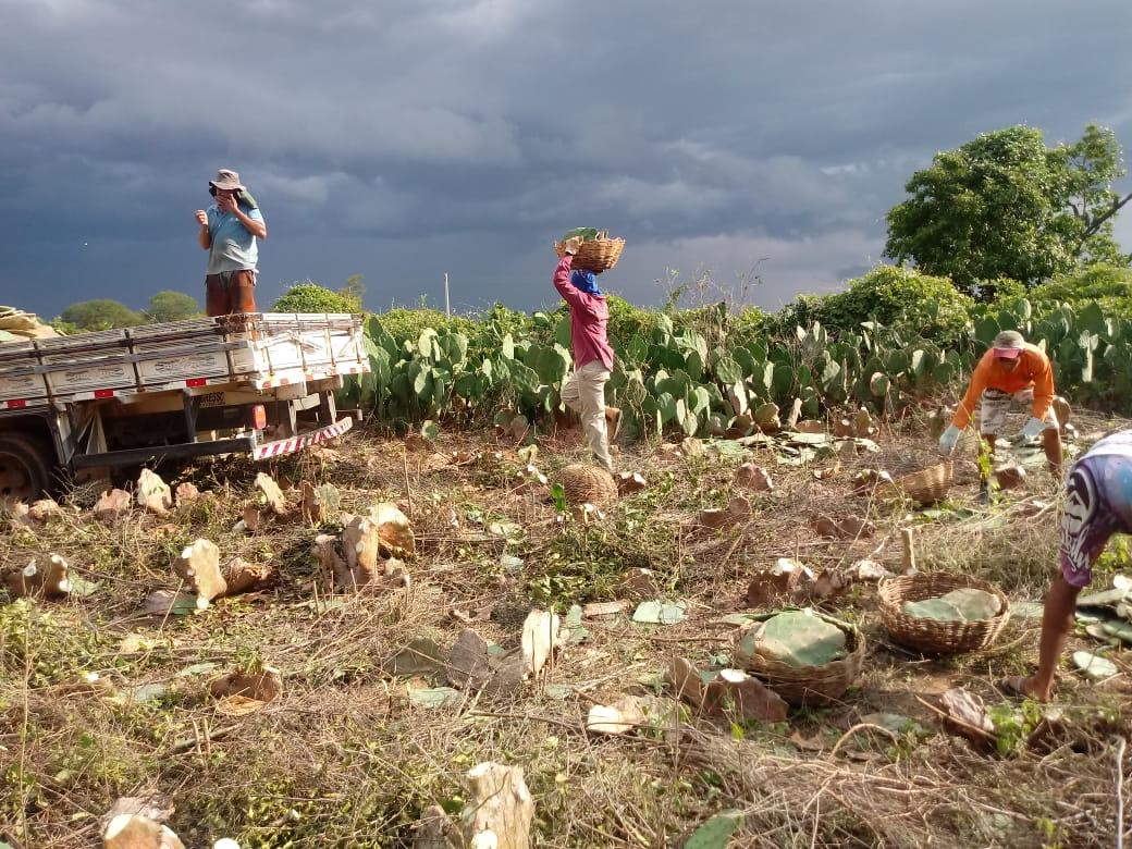 distribuicao-de-palmas-continuam-com-associacoes-de-comunidades-rurais-em-monteiro1.jpeg