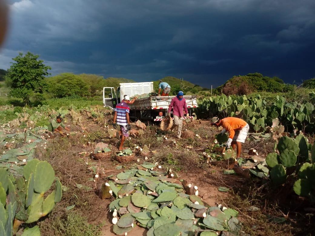 distribuicao-de-palmas-continuam-com-associacoes-de-comunidades-rurais-em-monteiro2.jpeg