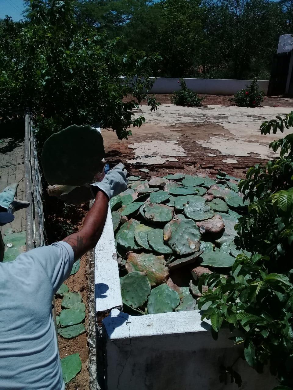 distribuicao-de-palmas-continuam-com-associacoes-de-comunidades-rurais-em-monteiro3.jpeg